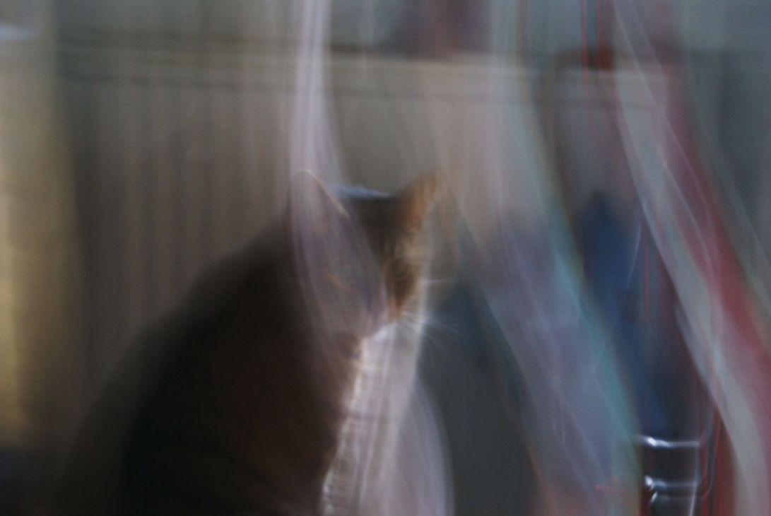 wispycat