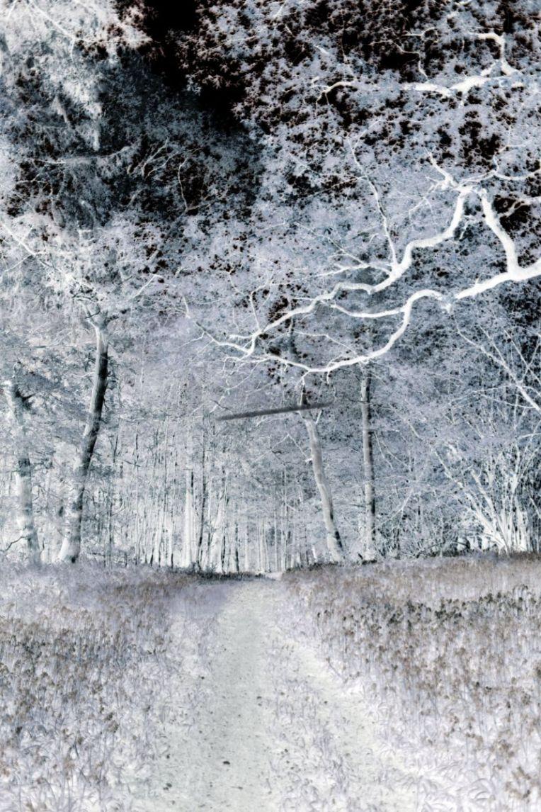 jane's_walk___lintel