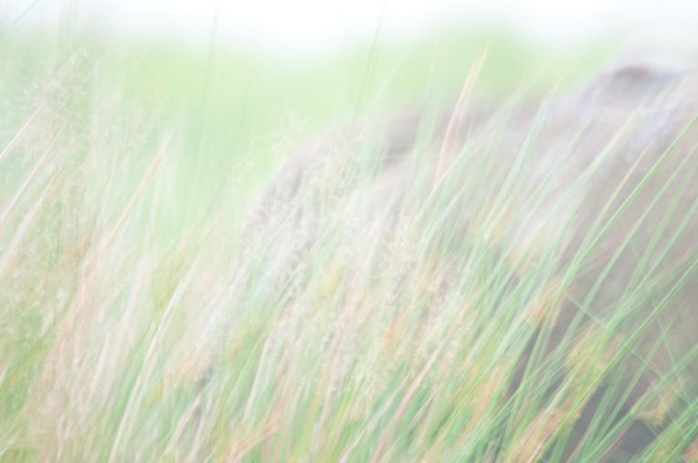 JHudson+-+Pastel+Grass