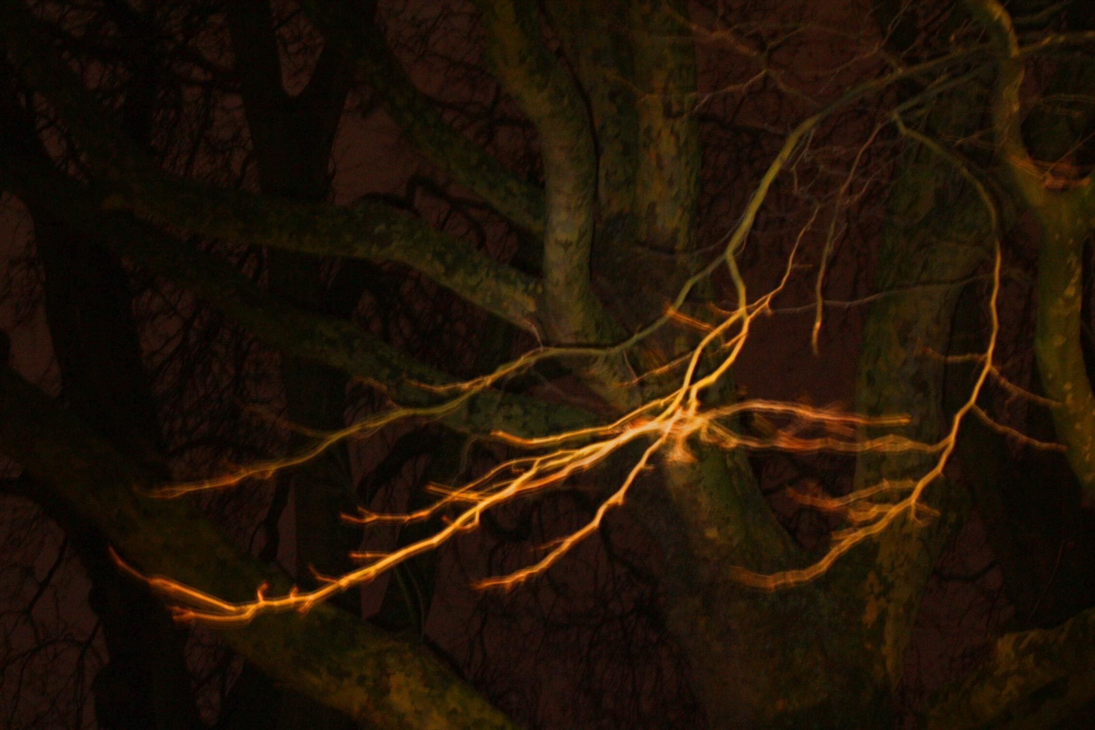 Urban Trees V